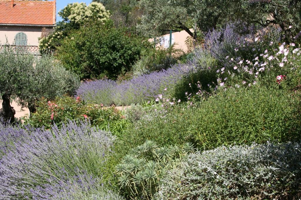 Conception et realisation dun jardin naturel mediterraneen for Realisation jardin